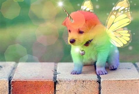 puppies and rainbows rainbow unicorn puppies www pixshark images galleries with a bite