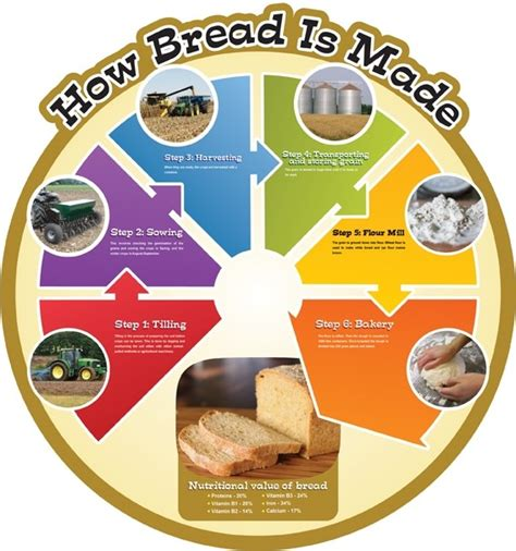 how is food cycle board how bread is made from edusentials