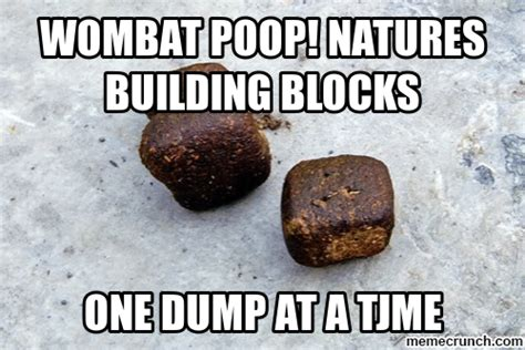 Poop Meme - wombat poop picture and images