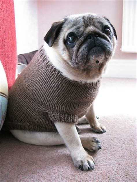 elizabeth pug 17 best images about crochet projects to do pets on chihuahuas pets and