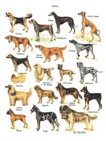 Types Of Dogs Different Types Of Dogs Breeds Jpg