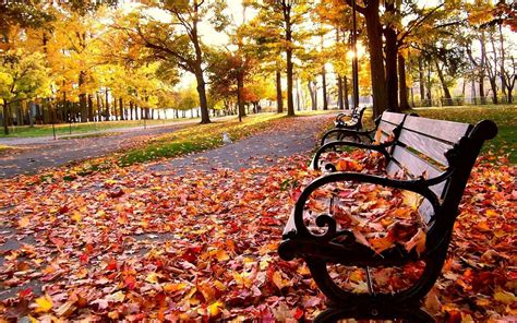 fall bench bench leaf fall wallpaper 1920x1200 29466