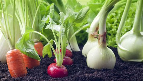 sle business plan vegetable farm organic farm business plan