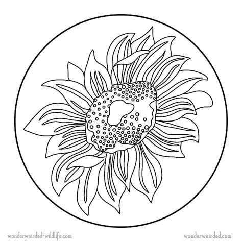 sunflower mandala coloring pages sunflower mandala coloring pages free flower coloring