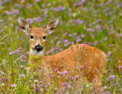 google images deer abigail s woodland animals on pinterest woodland animals