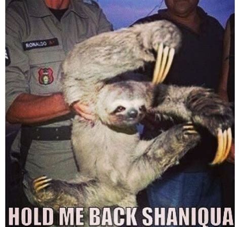 Creepy Sloth Meme - 8 best creepy sloth images on pinterest creepy sloth