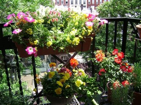 Gardening Escapists 17 Best Images About Escape Plants On