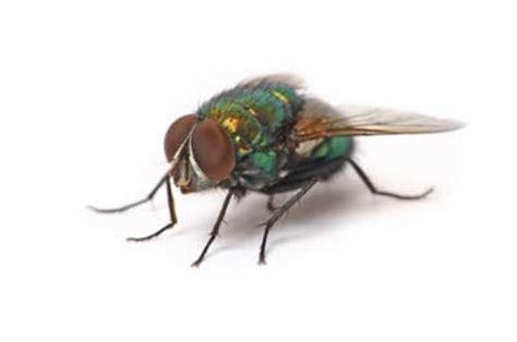 will keeping lights on keep mice away can a bag of water keep flies away flies away