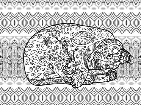 zendoodle coloring pages for adults zendoodle coloring page for adults funny cat stock