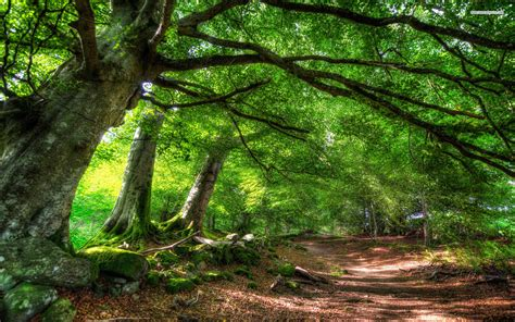 wallpaper hd 1920x1080 forest green forest path wallpapers green forest path stock