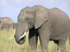 Elefant pictures to pin on pinterest