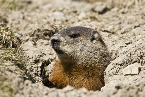 groundhog day repeat happy groundhog day seeing shadows electrical grounding