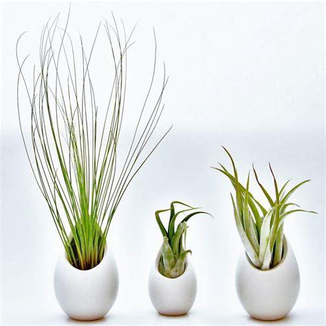 hanging air plant container 2 large 1 mini ceramic vases
