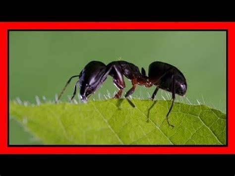 come combattere le formiche in casa eco rimedi contro gli insetti le formiche in casa doovi