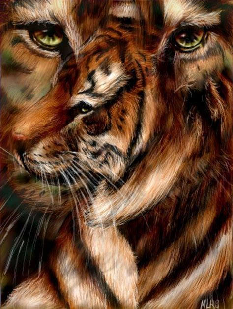 beautiful tiger tigers images beautiful tiger wallpaper and background