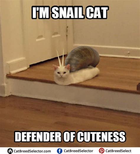Cute Cat Memes - cat memes cat breed selector