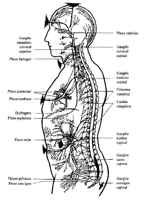 Esoterismo de las Glándulas Endócrinas. Revista La