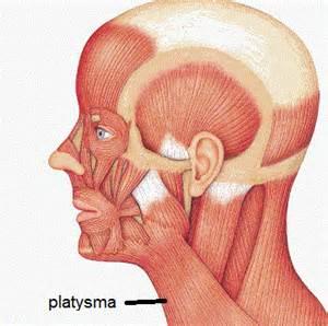 Platysma related keywords amp suggestions platysma long tail keywords