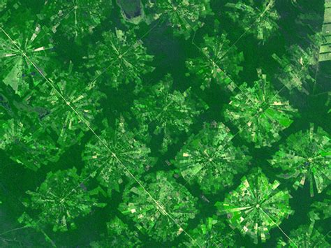 pattern of agriculture and types of forest in bangladesh agricultural patterns around the world indian defence forum
