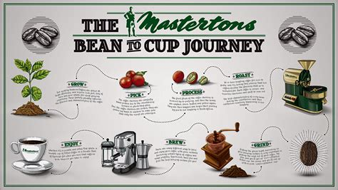 Process Of A Cup Of by Coffee Bean To Cup South Africa Coffee Coffee Tea