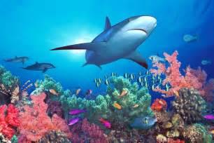 pacific ocean fish images