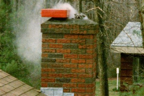 Bats In Fireplace Chimney by Chimneys Animal Removal From Chimneys And Fireplaces