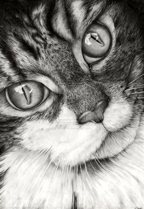 cat and drawing cat drawing by vinnie14 on deviantart