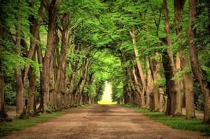 nice landscape road green trees beautiful landscape nature road green