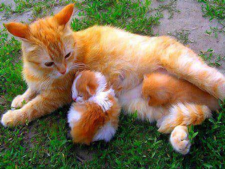 naluri induk hewan menyayangi anaknya gambar kasih