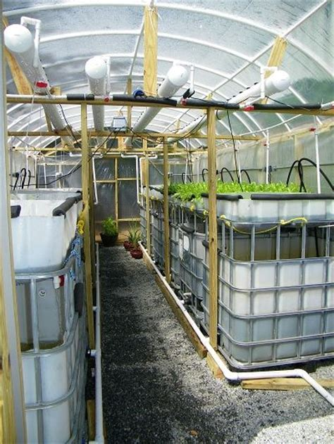 aquaponic systems supplies organic grown tilapia rainbow