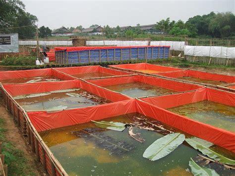 Jual Terpal Kolam Ikan Di Medan menjual benih ikan lele sangkuriang berkualitas unggul