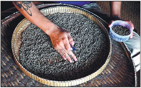 mark trahant pipeline fight highlights the power of a worker sorts through kot pepper in cambodia lauded by