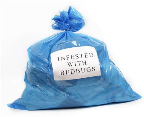 bed bugs travel on clothing how to get rid of bedbugs safebee