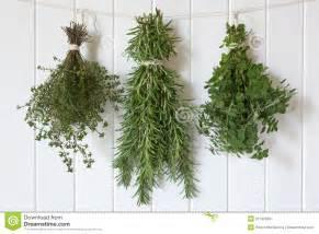 hanging herbs fresh herbs hanging royalty free stock photos image 31199058