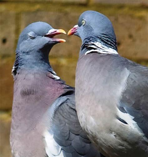 pigeon repellent