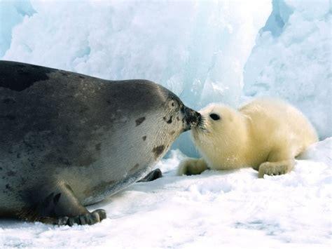Sea Ls by Encyclopaedia Of Babies Of Beautiful Animals Amazing