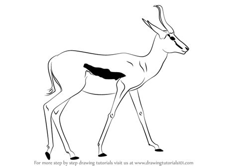 coloring pages springbok image gallery springbok drawings
