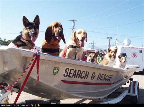 goggie ob teh week search  rescue    boat