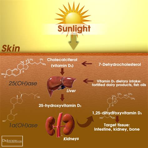 sunlight and vitamin d3 for brain health drjockers