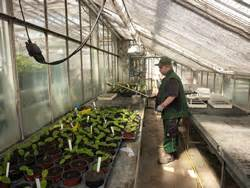 Ausbildung Garten Und Landschaftsbau Werker by Ausbildung Zum Werker Im Zierpflanzenbau