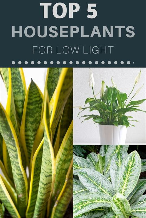 houseplants for low light conditions best 25 indoor plants low light ideas on low light houseplants low light plants