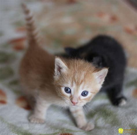 Скачать фото про котят бесплатно
