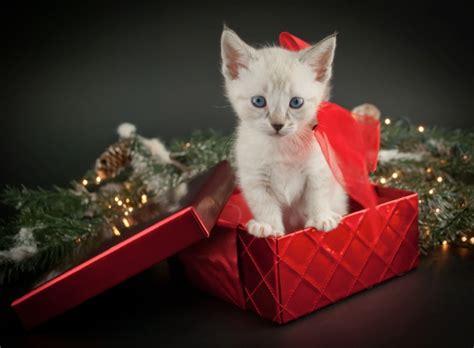404378 un chat pour la vie offrir un chat pour no 235 l c est pour toute la vie