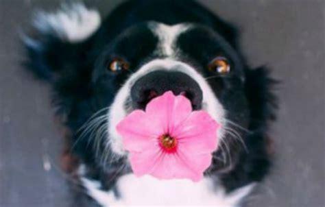 fiori di bach rimedi fiori di bach rimedi naturali per aiutare i cani