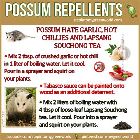 how to get rid of possums in backyard healthy living natural repellents for getting rid of