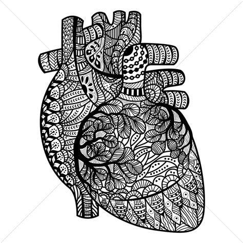 intricate heart coloring pages intricate human heart design vector image 1570140