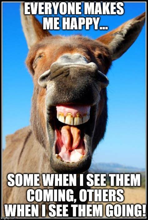 Donkey Meme - happy donkey imgflip