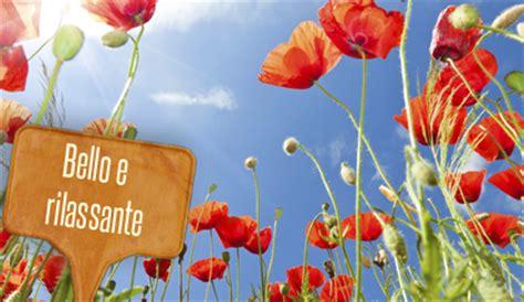 significato dei fiori papavero linguaggio dei fiori il papavero 232 perfetto per