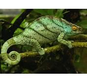 Reptiles  07 1600x1200 11664 HD Wallpaper Res