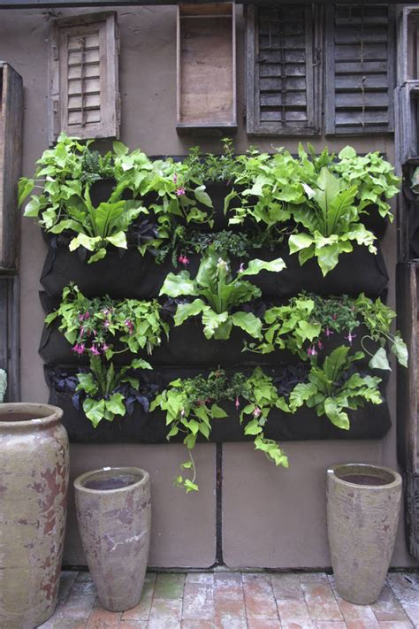 Living Wall Eat Drink Garden Santa Barbara California Hanging Wall Gardens